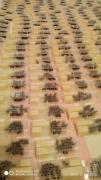 Продаются пчеломатки Карпатка. Бджоломатки